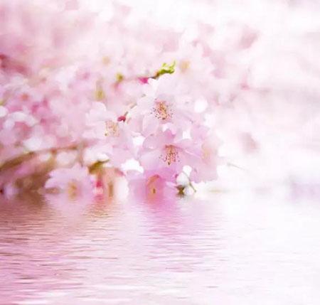 春色百媚生,世间所有的美都不及你